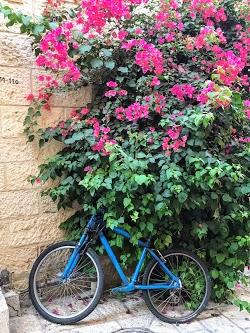 Bike and Bougainvillea