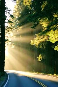 Redwood National Park Sunset